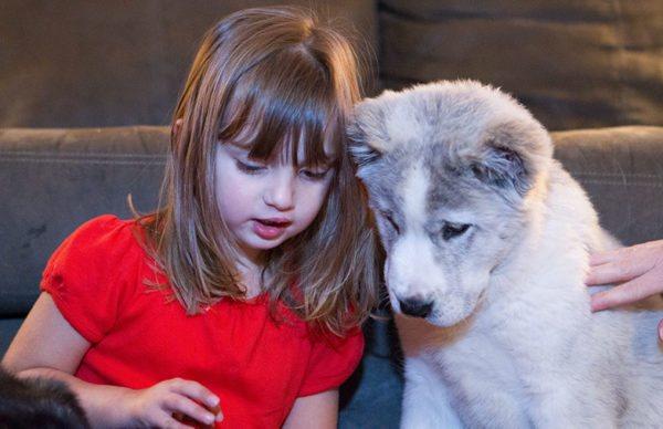 Щенок САО и ребенок